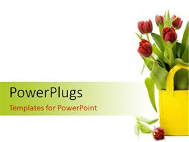 PowerPlugs: PowerPoint template with fresh tulips in yellow basket sitting on white background