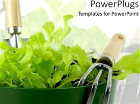 PowerPlugs: PowerPoint template with fresh young green lettuce in dark green pot with gardening tools