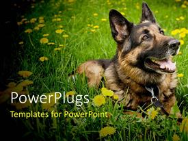 PowerPlugs: PowerPoint template with a dog enjoying itself in the grass