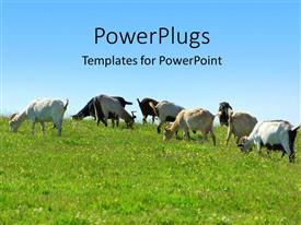 PowerPoint template displaying goats grazing in green grass vegetation with blue sky