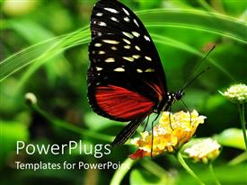 PowerPlugs: PowerPoint template with golden helicon butterfly perches on flower to suck nectar