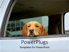 PowerPoint template displaying golden retriever looking out the window of a car