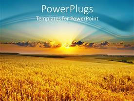 PowerPlugs: PowerPoint template with golden wheat field at sunset with light blue sky and setting sun in the background