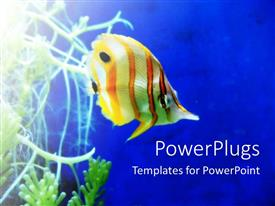 PowerPoint template displaying a goldfish with bluish background and the place for text