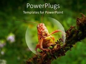 PowerPlugs: PowerPoint template with a grasshopper magnified with greenery in the background