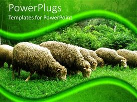 PowerPoint template displaying grazing sheep, green background, grass, bushes