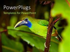 PowerPlugs: PowerPoint template with a green bird with a number od leaves and place for text