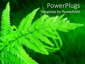 PowerPlugs: PowerPoint template with green fern leaf on blurred grass, glowing leaf in forest