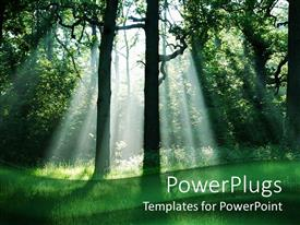 PowerPoint template displaying green forest with bright sunlight rays illuminating green trees and grass