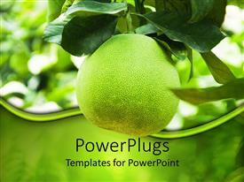 PowerPlugs: PowerPoint template with green grapefruit growing on branch, nutrition, health, agriculture