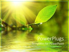 PowerPoint template displaying green leaf with a water view under it and the sun shinning