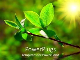PowerPlugs: PowerPoint template with green leaves on plant with bright sunlight illuminating it