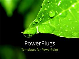 PowerPlugs: PowerPoint template with green plant leaf and water drop on nature