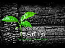 PowerPlugs: PowerPoint template with a green plant with a number of bricks in the background