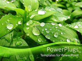 PowerPlugs: PowerPoint template with green plant with water droplets in its natural habitat
