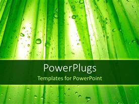 PowerPlugs: PowerPoint template with green plants with a lot of water droplets