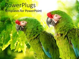 PowerPlugs: PowerPoint template with green tropical parrots perch on tree in forest