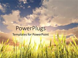 PowerPoint template displaying green wheat field under the blue sky with white clouds and the sun in the background