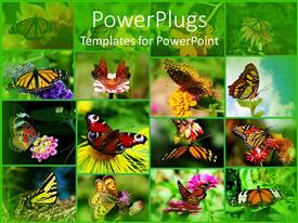 PowerPlugs: PowerPoint template with grid composite of butterflies landing on flowers