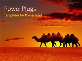PowerPlugs: PowerPoint template with a group of camels in the desert