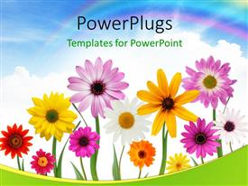 PowerPlugs: PowerPoint template with group of colorful summer daisies and sunflower with beautiful sky in the background