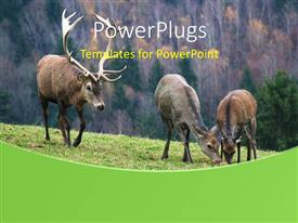 PowerPoint template displaying group of deer over green ground on autumn background