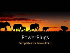 PowerPlugs: PowerPoint template with a group of elephants with sunset in the background