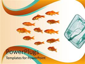 PowerPlugs: PowerPoint template with group of goldfish swimming away from net