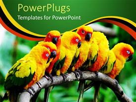 Presentation design enhanced with a group of parrots together with blurred background