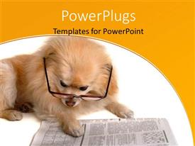 PowerPlugs: PowerPoint template with hairy dog with eye glasses reading pages of newspaper