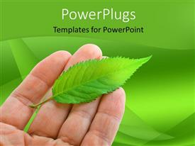 PowerPoint template displaying hand holding fresh green leaf over green background
