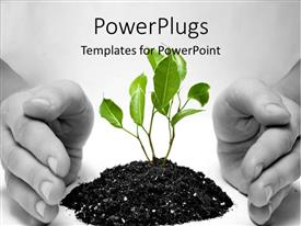 PowerPlugs: PowerPoint template with hand protects green plant sprouting from Earth on white surface