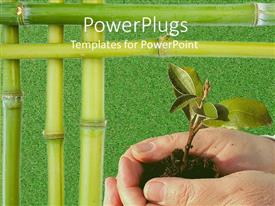 PowerPlugs: PowerPoint template with hands holding young tree plant with bamboo stick borders on green grass background