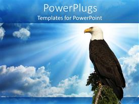 PowerPlugs: PowerPoint template with a hawk sitting on a branch of tree with clouds in the background