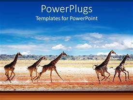 PowerPlugs: PowerPoint template with herd of giraffes running on savanna