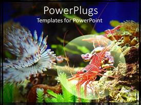 PowerPoint template displaying highlighted close up of shrimp crawling on rocks underwater with underwater life surrounding the shrimps