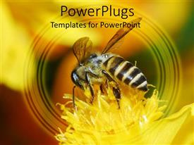 PowerPoint template displaying a honey bee sucking nectar from a yellow flower