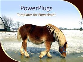 PowerPlugs: PowerPoint template with a horse drinking already melted snow from the ground