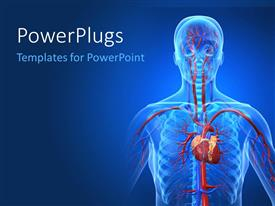 PowerPlugs: PowerPoint template with a human anatomy with bluish background
