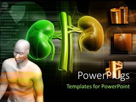 PowerPlugs: PowerPoint template with human anatomy with kidney structure in background