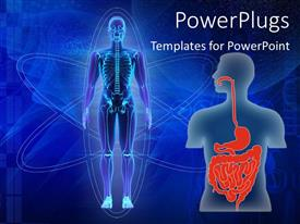 PPT theme consisting of human body showing skeleton and human torso with digestive tract in red
