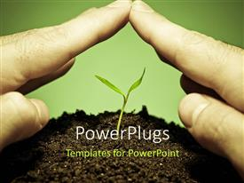 PowerPlugs: PowerPoint template with human hands protecting a new green seedling with green color