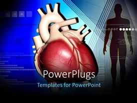 PowerPoint template displaying a human heart with a human diagram beside it