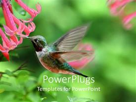 PowerPlugs: PowerPoint template with a hummingbird feeding on a flower