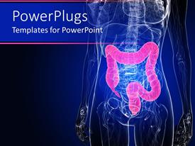 PowerPlugs: PowerPoint template with inside of human body in dark blue with colon highlighted in pink