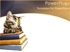 PowerPlugs: PowerPoint template with kitten sleeping on stack of books