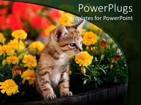 PowerPlugs: PowerPoint template with a kitten wit a number of flowers in te background