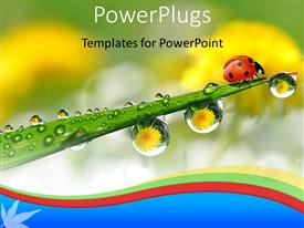 PowerPlugs: PowerPoint template with ladybug on green plant stem withwater drops from morning dew