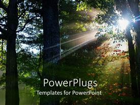 PowerPoint template displaying landscape sun shining through trees of the forest, fall leaves