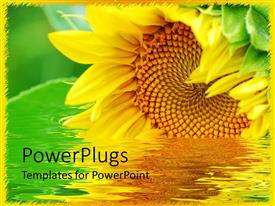 PowerPlugs: PowerPoint template with large beautiful sunflower on a river with green background